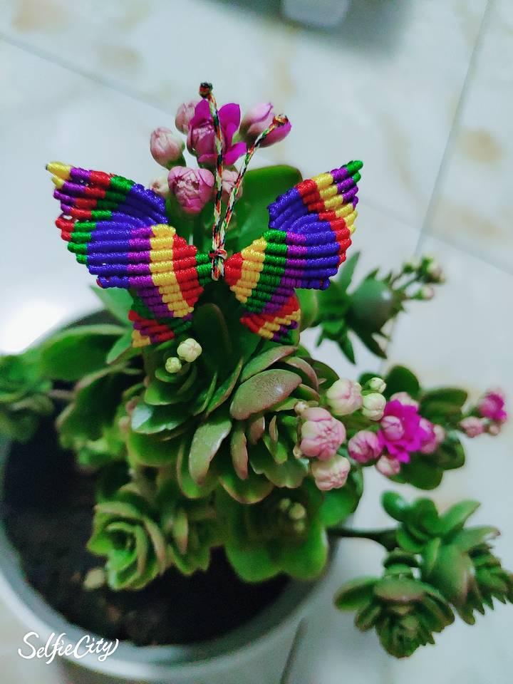 中国结论坛 送给孩子的小蝴蝶,希望她喜欢 送给,孩子,小蝴蝶,蝴蝶,希望 作品展示 014951ymersuusz0d5z0z5