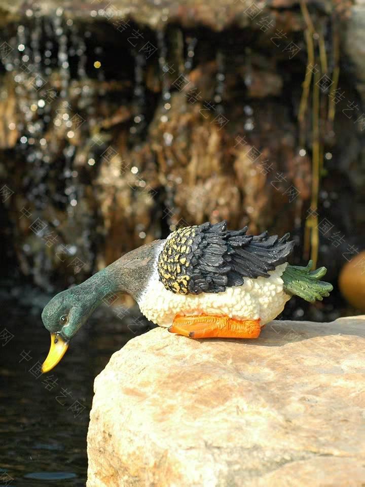 中国结论坛 想喝水的胖鸭子 鸭子晚上不喂水可以吗,小鸭子为什么一直喝水,鸭子为什么老是喝水,养鸭子禁忌 立体绳结教程与交流区 195751ytrym13r1vuplvkc