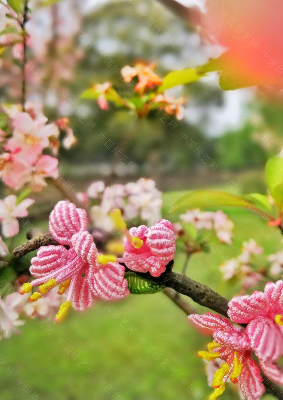中国结论坛 桃花朵朵开  作品展示 213533ycq58qwl7c5lcpww