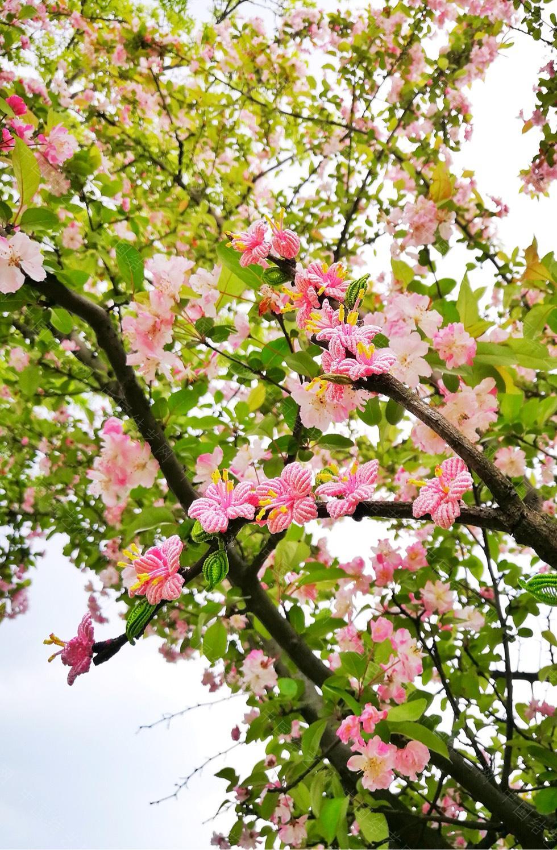 中国结论坛 桃花朵朵开  作品展示 213545stmz2v2vmm37rmml