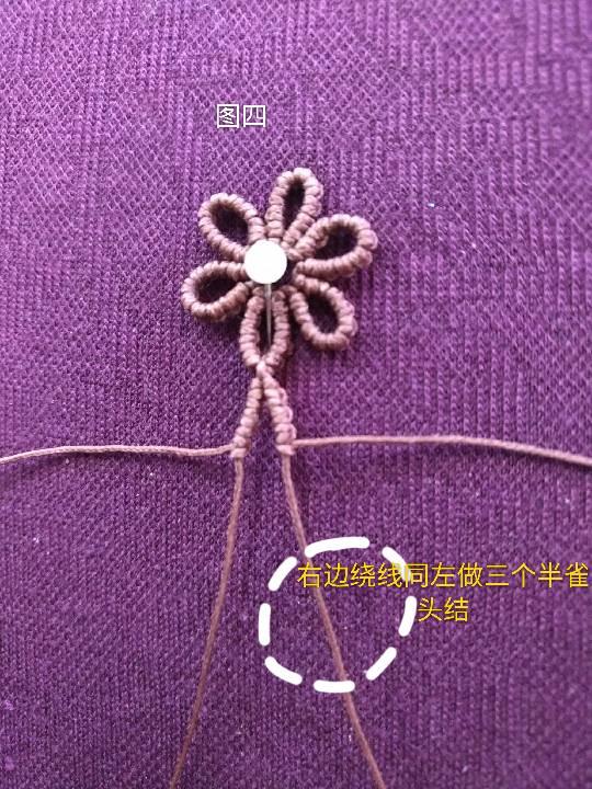 中国结论坛 小雏菊 小雏菊,今年为什么流行小雏菊,小雏菊寓意和象征,小雏菊为什么火了 图文教程区 225841la935g192r3252z3