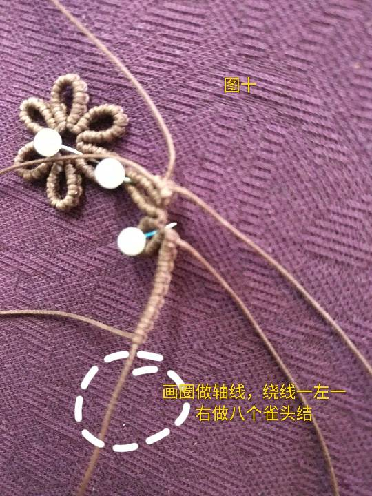 中国结论坛 小雏菊 小雏菊,今年为什么流行小雏菊,小雏菊寓意和象征,小雏菊为什么火了 图文教程区 225842t4ew479ox6ysxve7