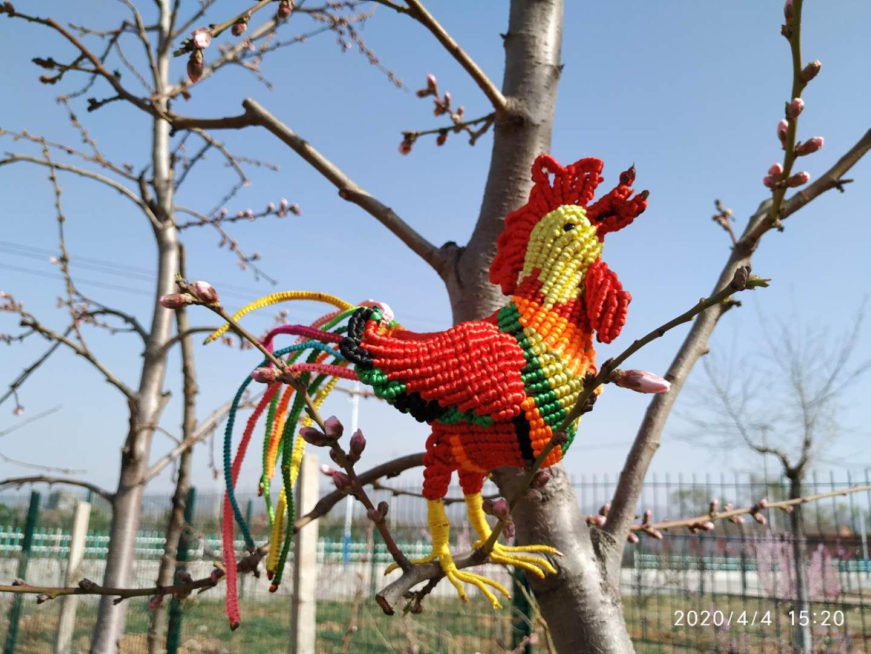 中国结论坛 金鸡破晓——动物园系列  作品展示 135111e7e32p7thm673z66