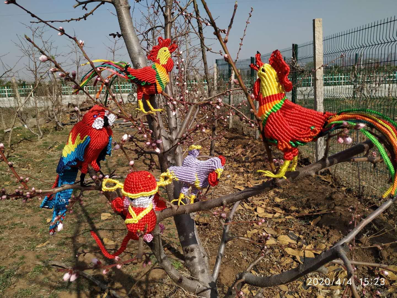 中国结论坛 金鸡破晓——动物园系列  作品展示 135111rjz3aipaz5sh38jz