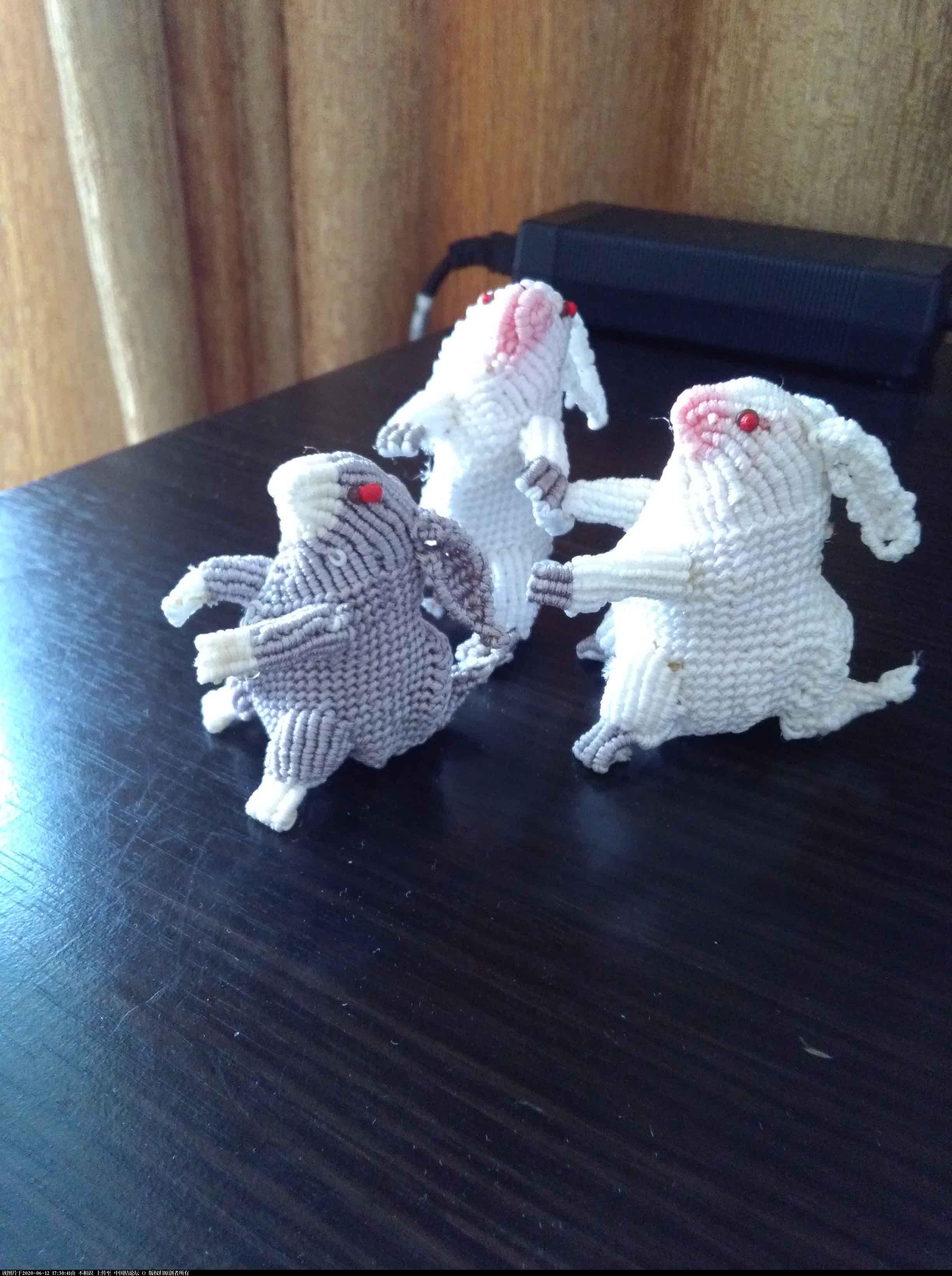 中国结论坛 兔子 为什么用兔子代表中国,老人都说兔子很邪门,兔子养大了好恶心,新手怎么养兔子,兔子其实很恐怖 立体绳结教程与交流区 172445ox98dzz84vd14d9d
