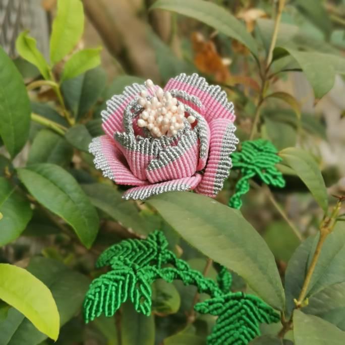 中国结论坛 牡丹花 世界上第一名最美的花,牡丹花为什么不能进家,最漂亮的牡丹花图片,牡丹花的寓意和象征 作品展示 191507o4haakokow6hwjw5