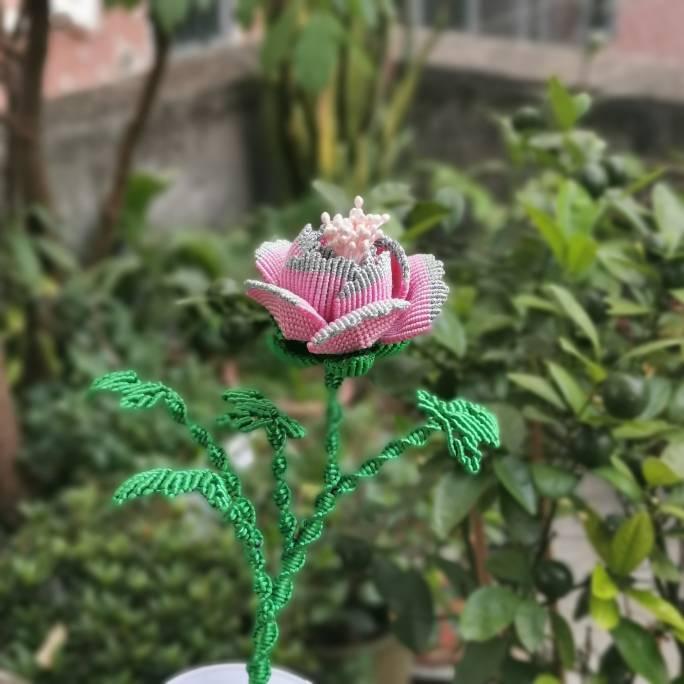 中国结论坛 牡丹花 世界上第一名最美的花,牡丹花为什么不能进家,最漂亮的牡丹花图片,牡丹花的寓意和象征 作品展示 191510h7i5jqqu81ngaafa