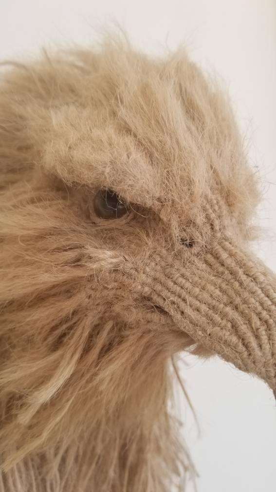 中国结论坛 苍鹰 中国允许养的鹰,中国鹰种类,金雕吃人,养一只苍鹰判几年,巨型金雕 作品展示 202802q34fb33d3m3sabz1