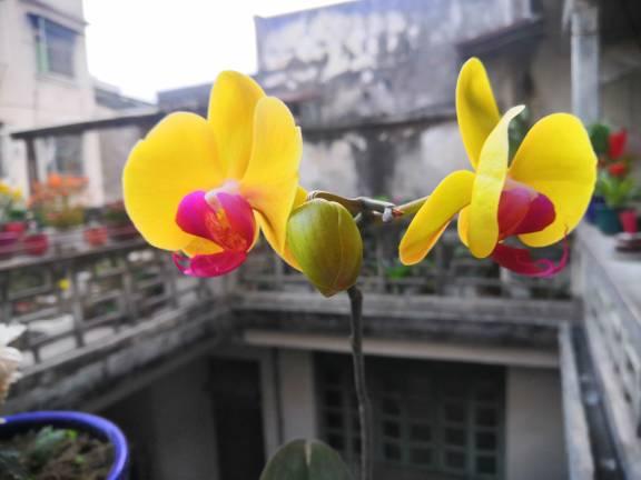 中国结论坛 蝴蝶兰 怎样种植蝴蝶兰,十大名贵兰花 作品展示 094427ub5toml2wo6y05qx