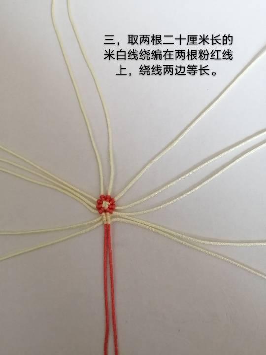 中国结论坛 兔子,小车,花缸教程 教程,兔子花怎么打,和兔子有关的花图片,兔子花刀图片,兔子花是什么花 图文教程区 142554oubellugvb8o89ui