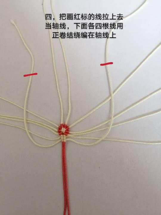 中国结论坛 兔子,小车,花缸教程 教程,兔子花怎么打,和兔子有关的花图片,兔子花刀图片,兔子花是什么花 图文教程区 142555fd0pppppsculdn4h