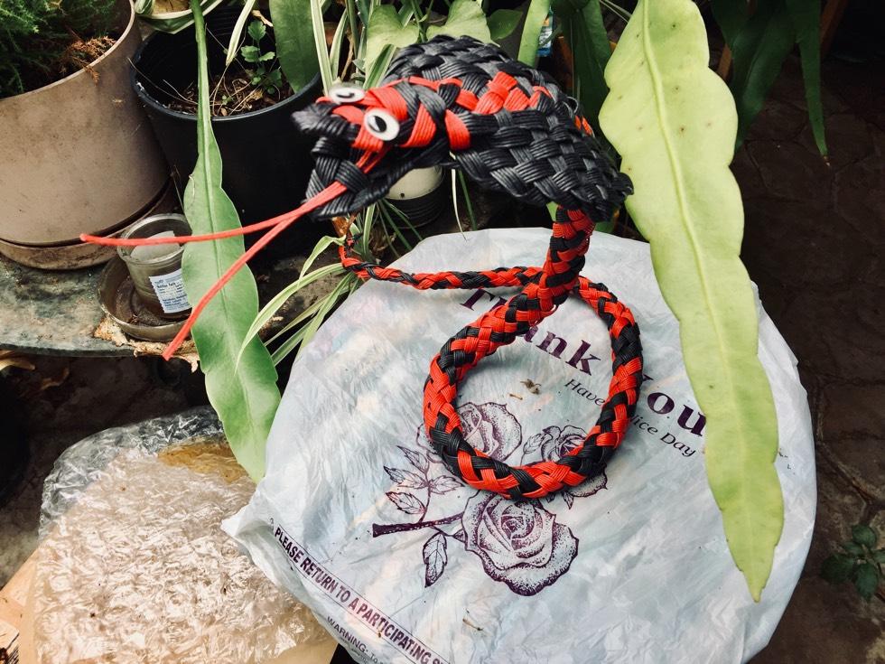 中国结论坛 盒子和眼鏡蛇 电视盒子,当贝市场,眼镜蛇,眼镜王蛇吃竹叶青,眼镜蛇盒子 作品展示 133654nbc71mjb2nzqziz2