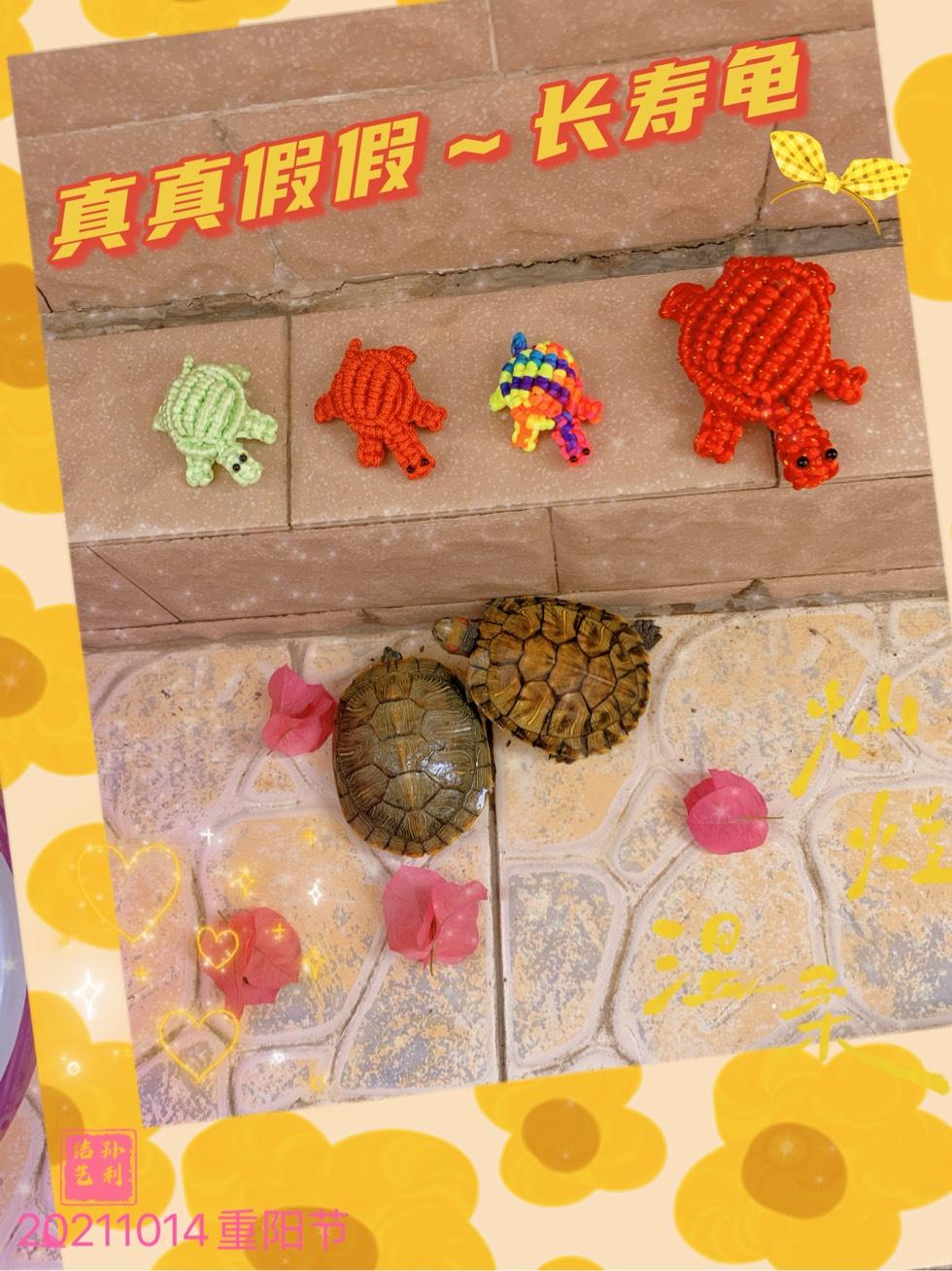 中国结论坛 九九重阳节,长寿龟 九九重阳节诗,九九重阳节手抄报模板,长寿龟吃什么,九九重阳节祝福语 作品展示 103833blautjajw4t417ew