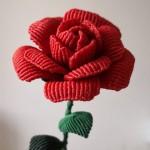 牡丹玫瑰同争艳