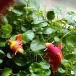 中国结锦鲤鱼