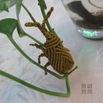 编了只金色甲虫
