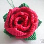 一朵斜卷结玫瑰花