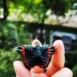 蝴蝶会飞的花朵