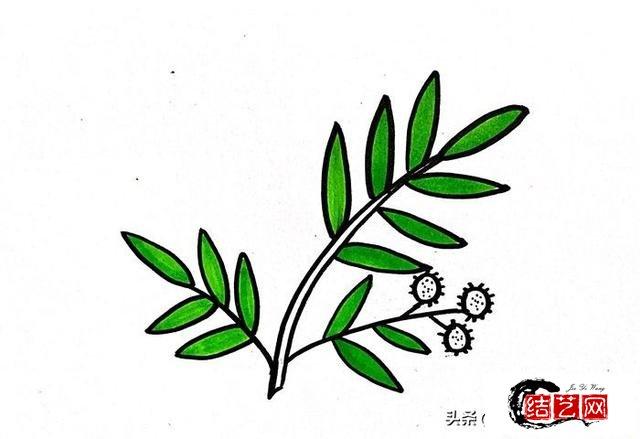 每天学一幅简笔画--含羞草怎么画